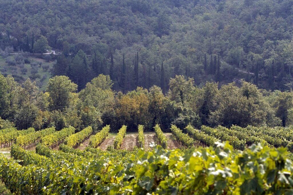 Nittardi vineyard