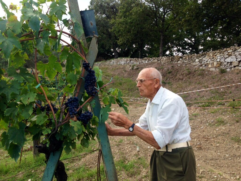 Virgilio controlling the quality of the grapes
